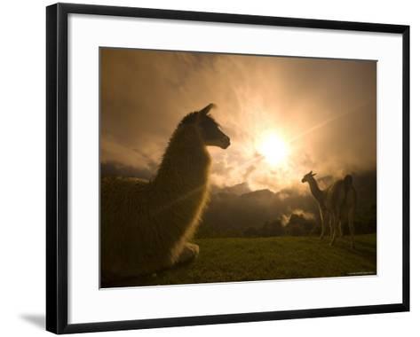 Llama and Clearing Mist Along Inca Trail-Ralph Lee Hopkins-Framed Art Print