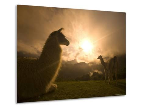 Llama and Clearing Mist Along Inca Trail-Ralph Lee Hopkins-Metal Print