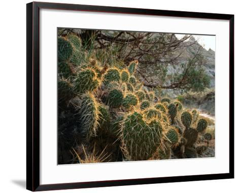 Ball Cactus or Pincushion Cactus in the Northern Region of Theodore Roosevelt National Park-Rob Blakers-Framed Art Print