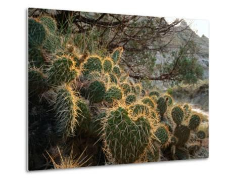 Ball Cactus or Pincushion Cactus in the Northern Region of Theodore Roosevelt National Park-Rob Blakers-Metal Print