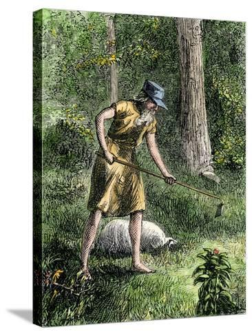 Johnny Appleseed Planting Apple Trees in the Ohio Wilderness--Stretched Canvas Print