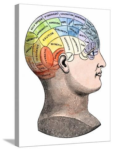 Phrenology Model of the Locations of the Various Organs of Mind in the Human Head--Stretched Canvas Print