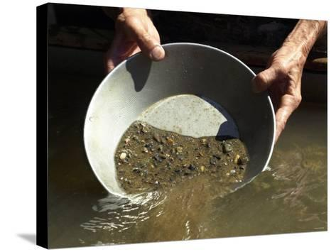 Reenactor Panning for Gold on the American River, Where the Gold Rush Started, Coloma, California--Stretched Canvas Print
