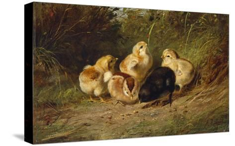 Chickens, 1878-Arthur Fitzwilliam Tait-Stretched Canvas Print