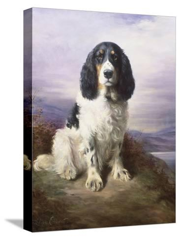 Royal, a Tri-Colour Working Springer Spaniel-Lilian Cheviot-Stretched Canvas Print