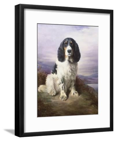 Royal, a Tri-Colour Working Springer Spaniel-Lilian Cheviot-Framed Art Print