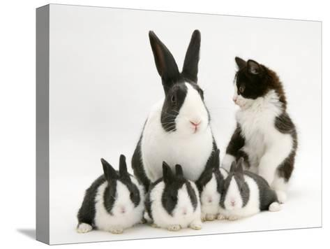 Blue Dutch Rabbit and Four 3-Week Babies and Black-And-White Kitten-Jane Burton-Stretched Canvas Print
