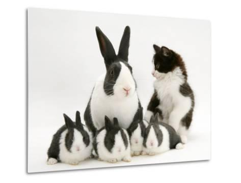 Blue Dutch Rabbit and Four 3-Week Babies and Black-And-White Kitten-Jane Burton-Metal Print