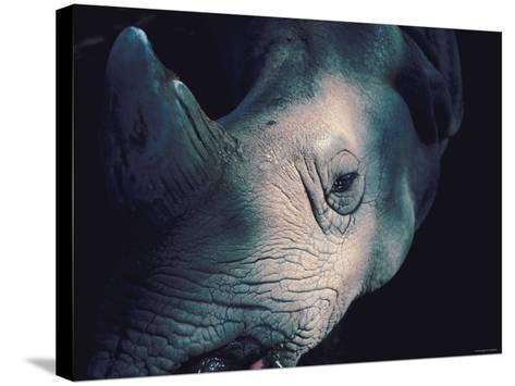Close Up of Wrinkled Rhinoceros Head in Nature--Stretched Canvas Print