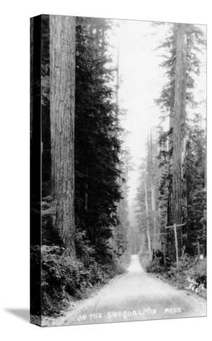 Snoqualmie Pass, Washington, View of a Wooden Dirt Road-Lantern Press-Stretched Canvas Print