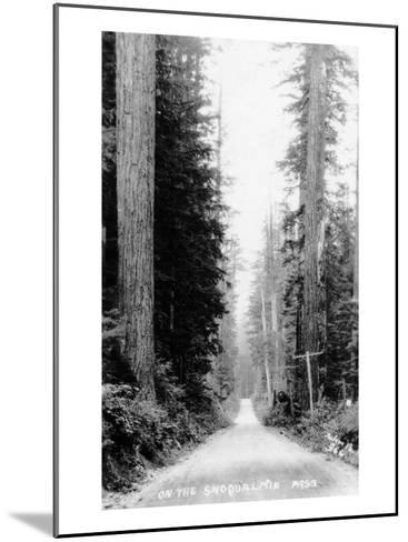 Snoqualmie Pass, Washington, View of a Wooden Dirt Road-Lantern Press-Mounted Art Print