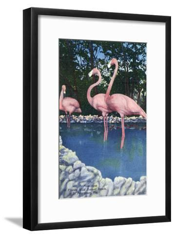 St. Petersburg, Florida, View of Pink Flamingos at Florida Wild Animal Ranch-Lantern Press-Framed Art Print