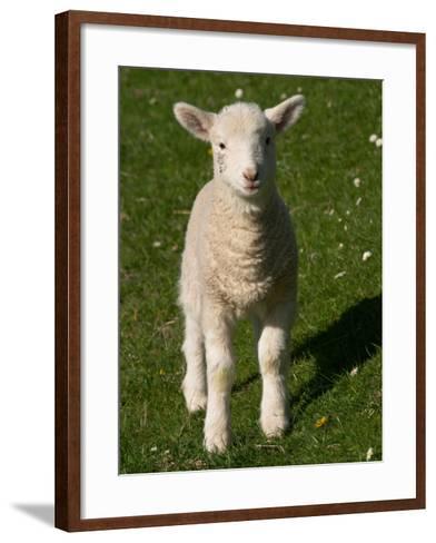 New Lamb, near Dunedin, South Island, New Zealand-David Wall-Framed Art Print