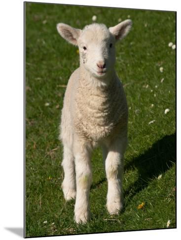 New Lamb, near Dunedin, South Island, New Zealand-David Wall-Mounted Photographic Print