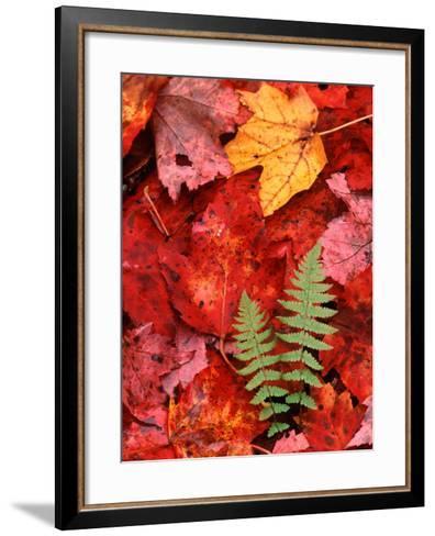Fallen Maple Leaves and Ferns-Charles Sleicher-Framed Art Print