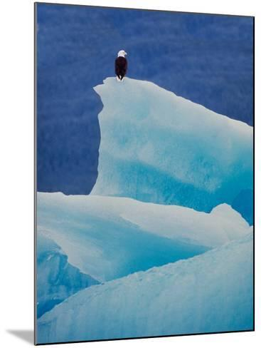 Bald Eagle on an Iceberg in Tracy Arm, Alaska, USA-Charles Sleicher-Mounted Photographic Print