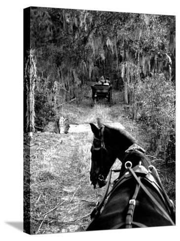 Horse-Drawn Carriages on Road Carrying Passengers to Deer Hunting Party-Alfred Eisenstaedt-Stretched Canvas Print