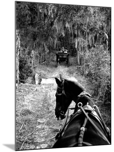 Horse-Drawn Carriages on Road Carrying Passengers to Deer Hunting Party-Alfred Eisenstaedt-Mounted Photographic Print