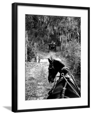 Horse-Drawn Carriages on Road Carrying Passengers to Deer Hunting Party-Alfred Eisenstaedt-Framed Art Print