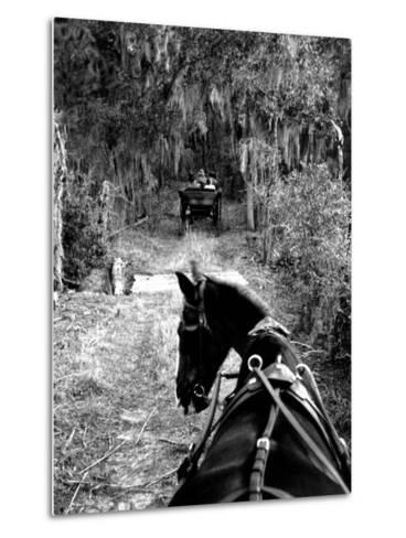 Horse-Drawn Carriages on Road Carrying Passengers to Deer Hunting Party-Alfred Eisenstaedt-Metal Print