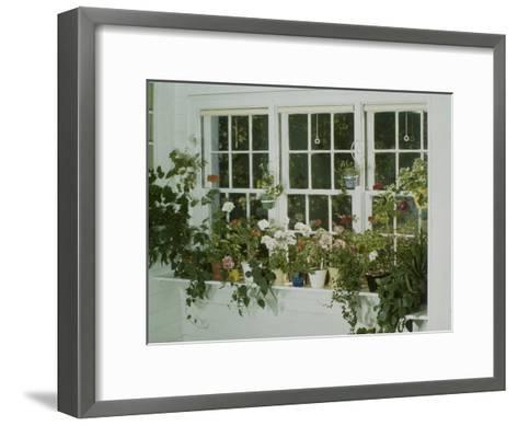 Geraniums-Eric Schaal-Framed Art Print