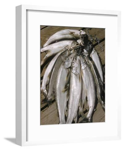 Close-Up of a Catch of Trout-Eliot Elisofon-Framed Art Print