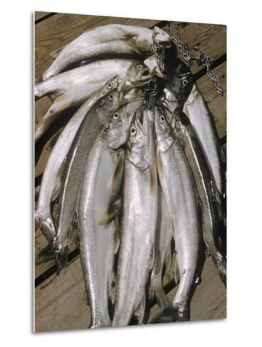 Close-Up of a Catch of Trout-Eliot Elisofon-Metal Print