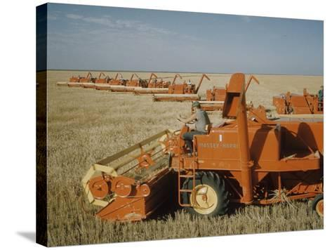 Harvest Story: Combines Harvest Wheat at Ranch in Texas-Ralph Crane-Stretched Canvas Print