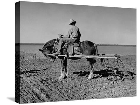 Horse Assisting the Farmer in Plowing the Field-Carl Mydans-Stretched Canvas Print