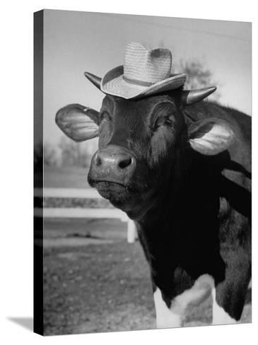 Trained Cow Wearing a Hat-Nina Leen-Stretched Canvas Print