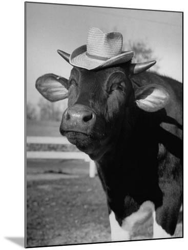 Trained Cow Wearing a Hat-Nina Leen-Mounted Photographic Print