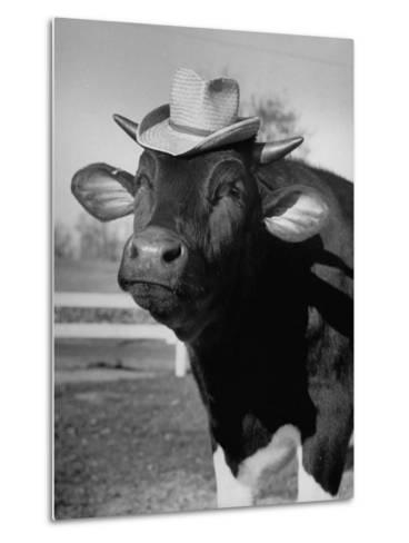 Trained Cow Wearing a Hat-Nina Leen-Metal Print