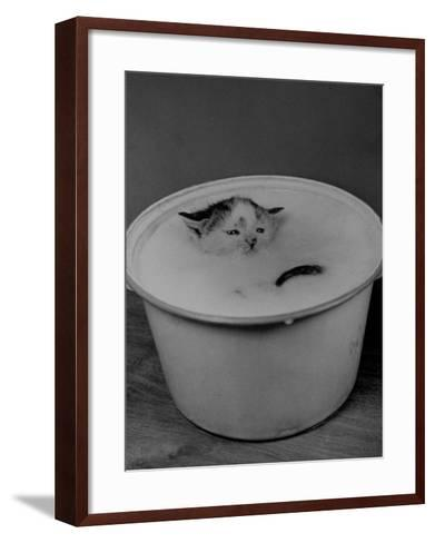 Greedily Hungry Kitten Almost Drowning in a Pot of Milk after Climbing over the Side to Drink-Nina Leen-Framed Art Print