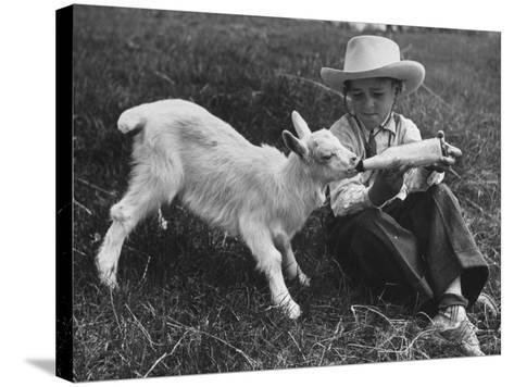 Little White Goat Being Fed from Bottle by Little Boy, at White Horse Ranch-William C^ Shrout-Stretched Canvas Print