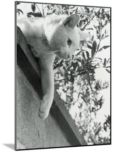 Cat Owned by Olympic Track Star Harold Connoly and Family-Bill Eppridge-Mounted Photographic Print