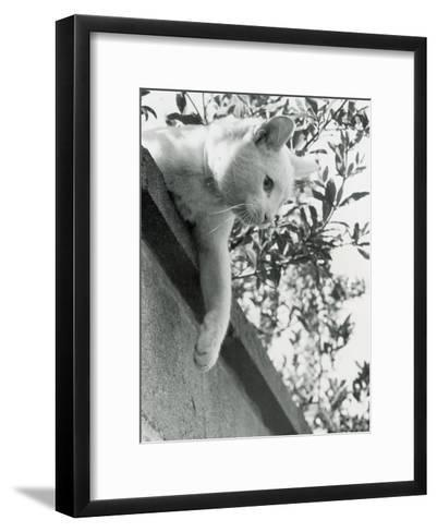 Cat Owned by Olympic Track Star Harold Connoly and Family-Bill Eppridge-Framed Art Print