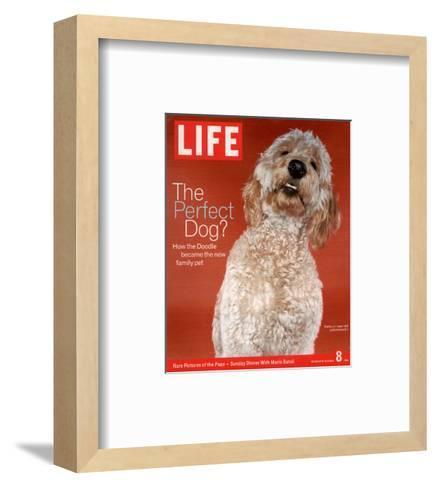 Sadie, 1 Year Old Goldendoodle, October 8, 2004-Jeff Minton-Framed Art Print