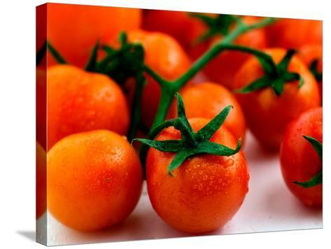Display of Delicious and Beautiful Red Cherry Tomatoes on Vine--Stretched Canvas Print