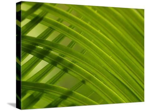 Close-Up of Palm Leaves Creating a Diagonal Background in Cameroon, Africa--Stretched Canvas Print