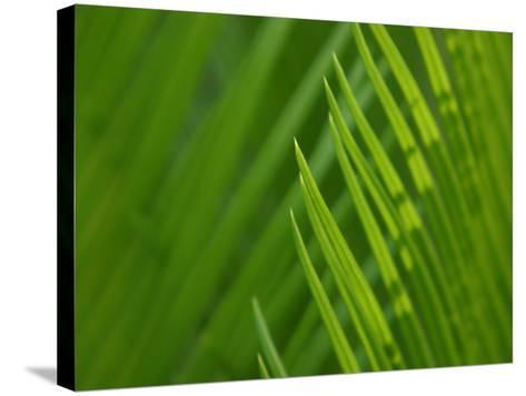 Close-Up of Green Leaves Staying Still in Nature--Stretched Canvas Print