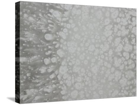 Abstract Splatter Pattern in Gray--Stretched Canvas Print