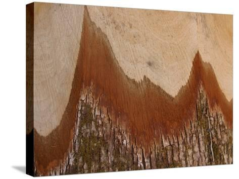 Close-Up of the Cross Section of a Split Log--Stretched Canvas Print