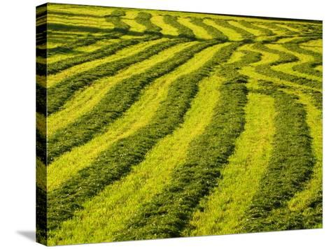 Lush Green Field Background--Stretched Canvas Print