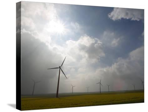 Eco-Friendly Windmills in Rural Field of Flowers under Cloudy Sky in the Netherlands--Stretched Canvas Print