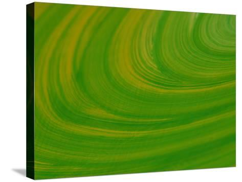 Green Background with Circular Striations--Stretched Canvas Print