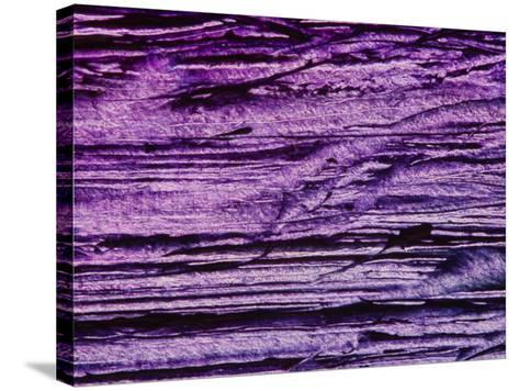 Purple, Weathered Background--Stretched Canvas Print
