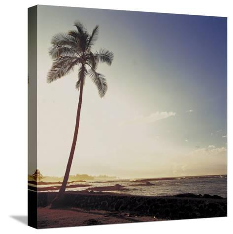 Silhouette of a Single Palm Tree on a Beach--Stretched Canvas Print