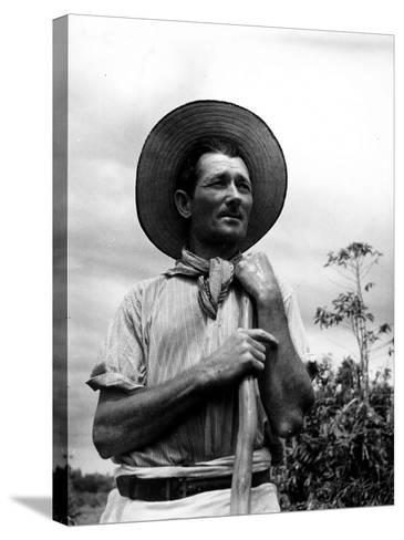 Italian Man Working in the Field, Cleaning the Coffee Trees-John Phillips-Stretched Canvas Print