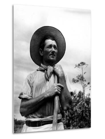 Italian Man Working in the Field, Cleaning the Coffee Trees-John Phillips-Metal Print