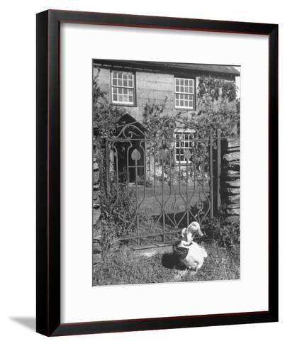 Jemima Puddle-Duck Posing in Front of Iron Gate Outside Beatrix Potter's Home-George Rodger-Framed Art Print